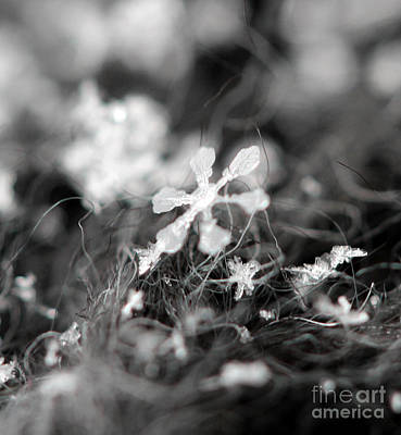 Photograph - Snow Flower by Stacey Zimmerman