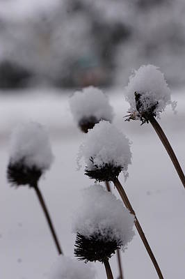 Snow Flowers Art Print by Brian Jones