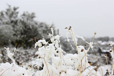 Photograph - Snow Flowers by Kume Bryant