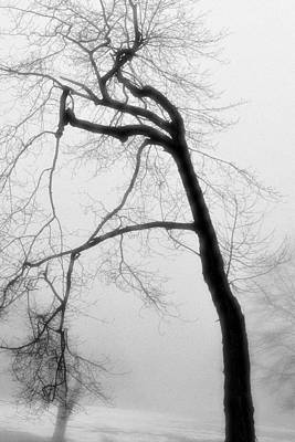 Wall Art - Photograph - Snow Fog Tree by James Chesnick