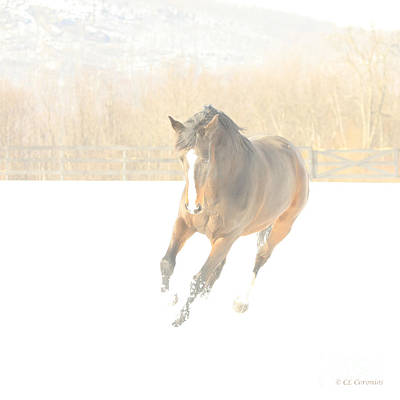 Photograph - Snow Fun by Carol Lynn Coronios