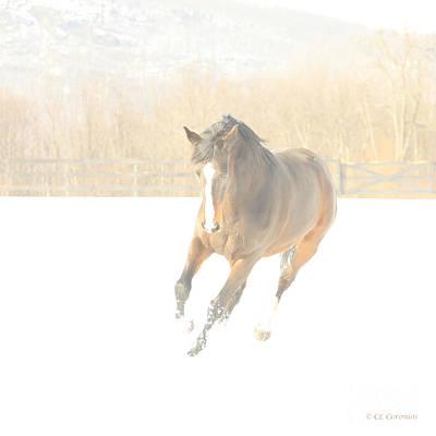 Photograph - Snow Fun by Carol Lynn Coronios