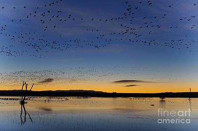 Snow Geese And Marsh Pond At Sunrise Art Print