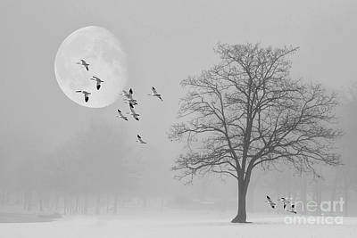 Snow Geese In The Snow Art Print by Tom York Images