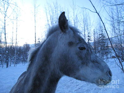 Photograph - Snow Horse Whisperer  by Elizabeth Stedman