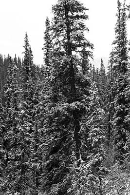 Photograph - Snow In Denali by Jon Emery