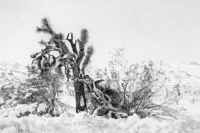 Digital Art - Snow In Joshua Tree by Sandra Selle Rodriguez