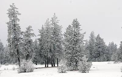 Gelid Photograph - Snow In The Forest by Jeff Swan