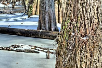 Cypress Swamp Photograph - Snow In The Southland by JC Findley