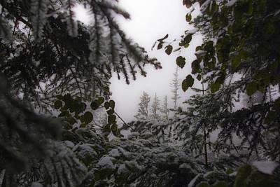Snow In Trees At Narada Falls Art Print