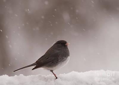 Winter Scene. Winter Landscape. Snow Landscape. Black And White. Birds Photograph - Snow Junco by Cheryl Baxter