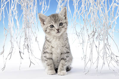 Christmas Eve Photograph - Snow Kitten by Greg Cuddiford