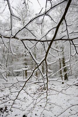 Photograph - Snow-laden Branches by Gary Eason