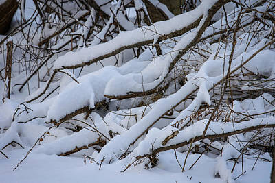 Photograph - Snow Laden by Jane Luxton