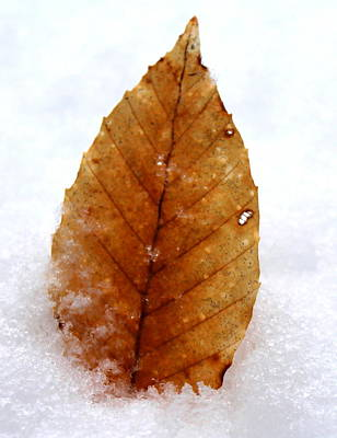 Print featuring the photograph Snow Leaf by Candice Trimble