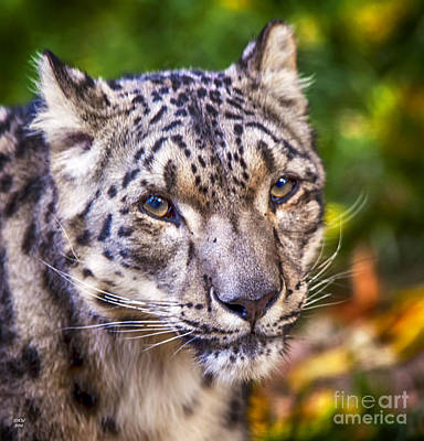 Leopard Photograph - Snow Leopard 1 by David Millenheft
