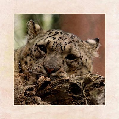 Digital Art - Snow Leopard 17 by Ernie Echols