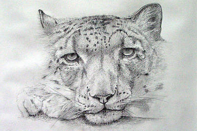 1-war Is Hell Royalty Free Images - Snow Leopard Royalty-Free Image by Alan Pickersgill