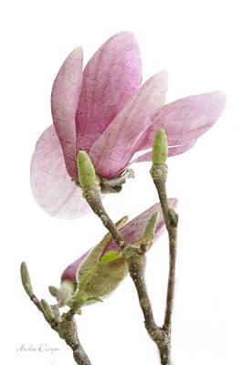 Blooming Digital Art - Snow Magnolia Painterly 1 by Andee Design