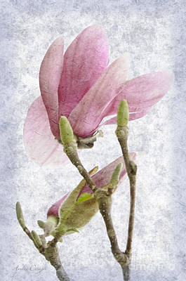 Painterly Photograph - Snow Magnolia Painterly 2 by Andee Design