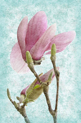 Photograph - Snow Magnolia Painterly 4 by Andee Design