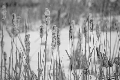 Photograph - Snow Marsh by Sara Hudock