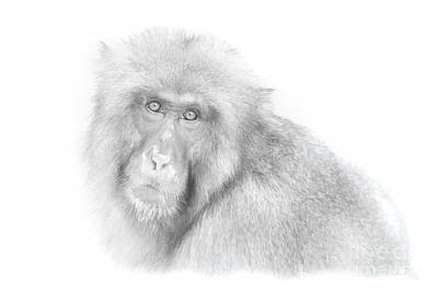 Digital Art - Snow Monkey Character Study I by Michele Steffey