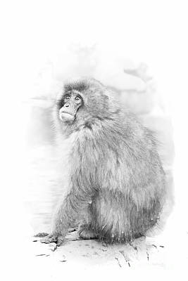 Digital Art - Snow Monkey Character Study II by Michele Steffey