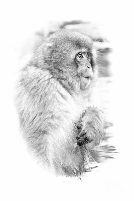 Digital Art - Snow Monkey Character Study IIi by Michele Steffey