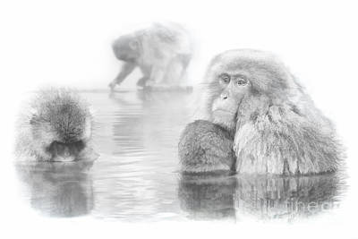 Digital Art - Snow Monkey Character Study V by Michele Steffey