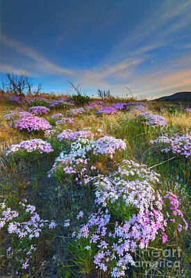 Phlox Photograph - Snow Mountain Cloud Explosion by Mike  Dawson