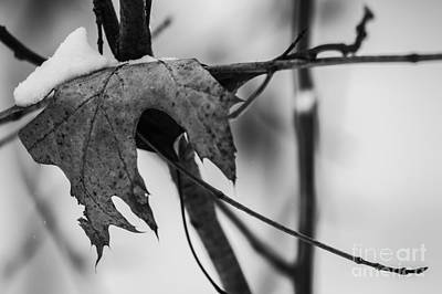 Photograph - Snow On An Old Leaf by JT Lewis