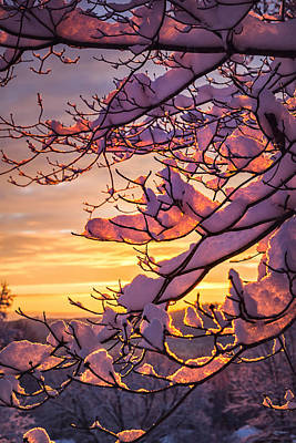 Photograph - Snow On Branches by Steven Llorca