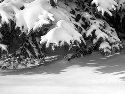 Photograph - Snow On Evergreen by Tom Brickhouse