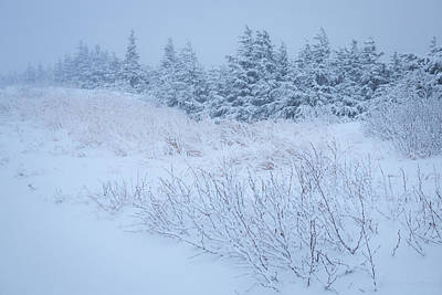 Art Print featuring the photograph Snow On New Years Eve by Tim Newton