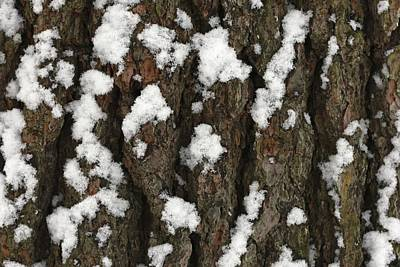 Snow On Pine Bark Art Print by Jim Gillen