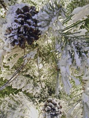 Photograph - Snow On Pine Tree by Joan Reese