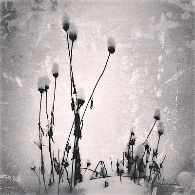 Photograph - Snow On Pods by Patricia Januszkiewicz