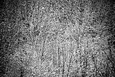 Photograph - Snow On Snow by Jacqueline M Lewis