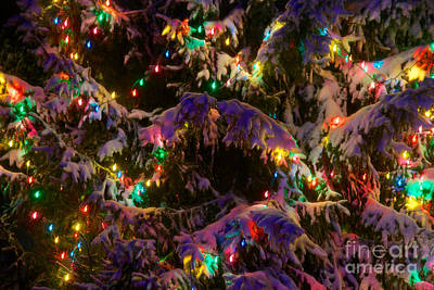 Photograph - Snow On The Christmas Tree 2 by Mark Dodd