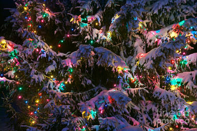 Photograph - Snow On The Christmas Tree by Mark Dodd