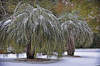 Photograph - Snow On The Palms by Linda Brown