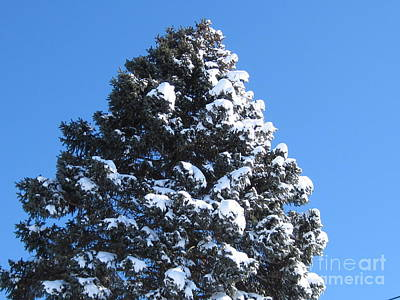 Snow On The Pine Art Print by Donna Cavender