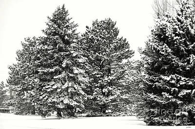Photograph - Snow On The Trees by Jon Burch Photography