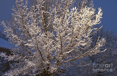 Photograph - Snow On Tree by Les Palenik