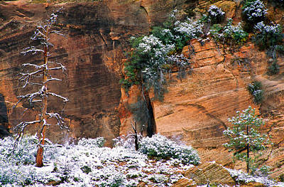 Zion National Park Photograph - Snow On Trees by Panoramic Images
