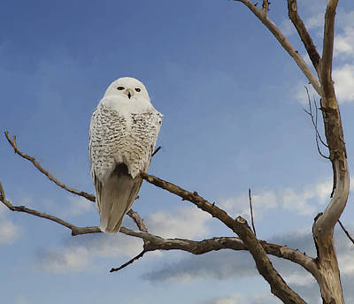 Rural Scenes Digital Art - Snow Owl by Rick Mosher