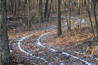 Photograph - Snow Path Winding Through The Woods by Annette Gendler