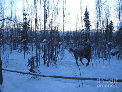Photograph - Snow Prancer by Elizabeth Stedman