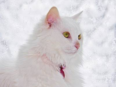 Photograph - Snow Princess by Judy Via-Wolff